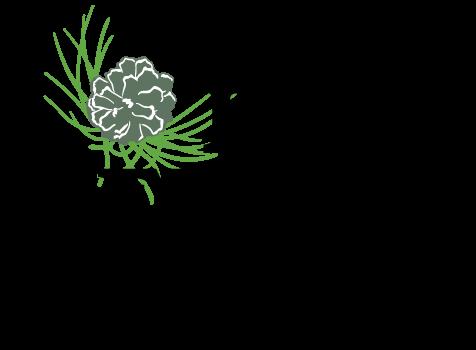Pine-Needle-Logo-Color